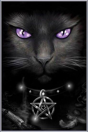 Magical cat bekeretezett plakát