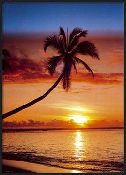 Sunset & palm tree Plakát