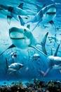 Shark - infested